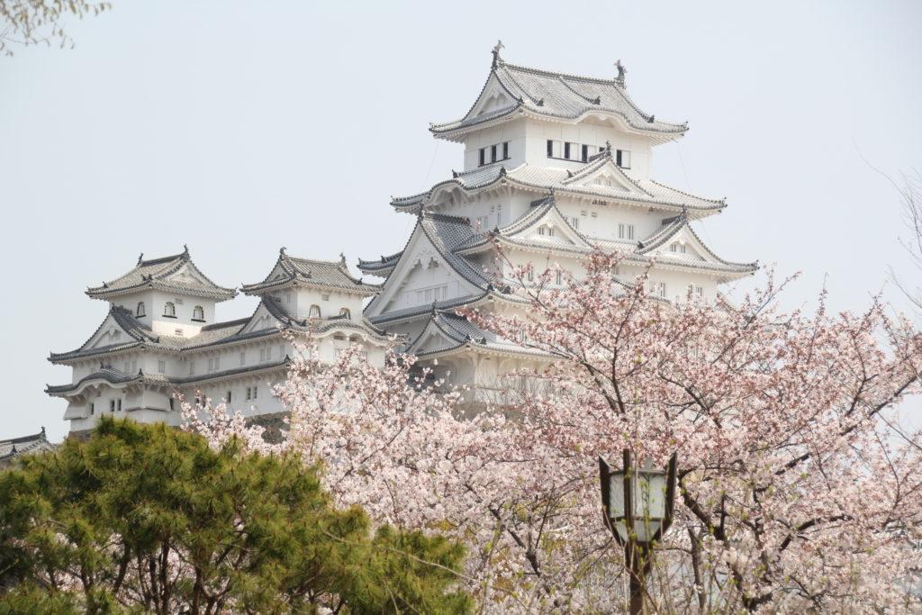 ぼたん園からの姫路城